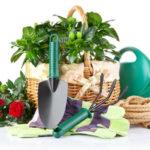 Как правильно посадить сад своими руками. Деревья и кустарники для сада